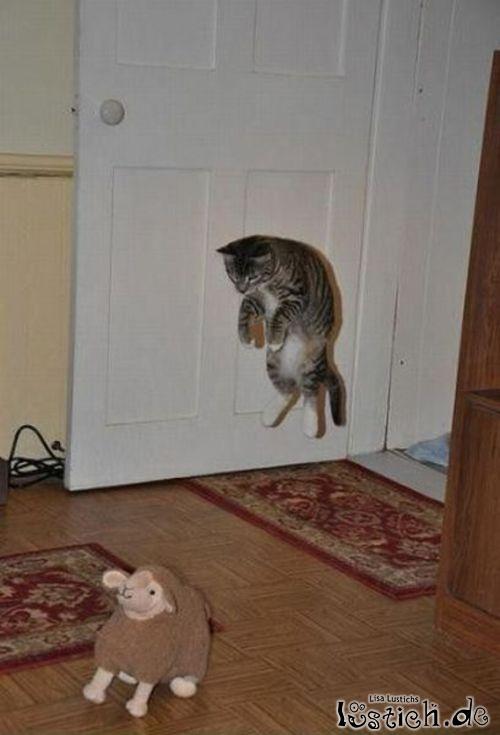 Katze greift Stoffschaf an
