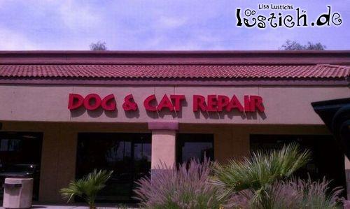 Reparatur von Hunden und Katzen