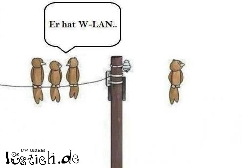 W-LAN Vogel