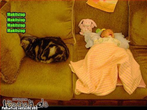 Baby nervt Katze
