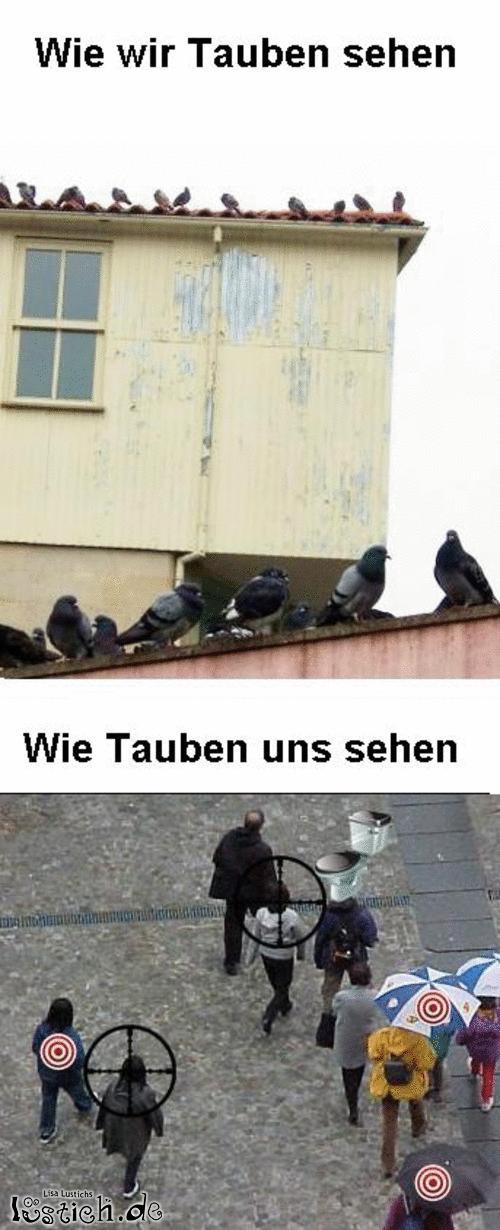 Wie Tauben uns sehen