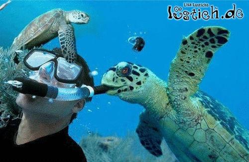 Gemeine Schildkröte