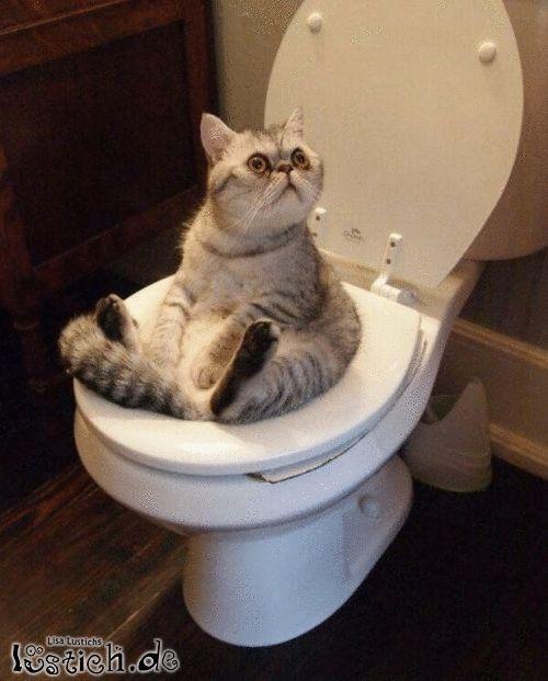 Aufklappbares Katzenklo