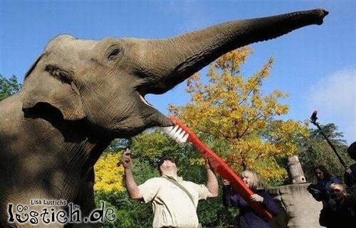Elefantenzähne