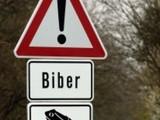Bieberkröten
