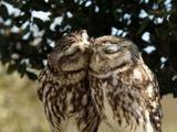 Eulen Küsschen