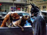 Batman und die coolen Hunde
