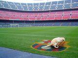 Hund mag Barcelona nicht