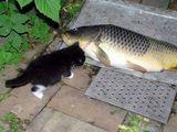 Fisch für das Kätzchen