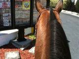 McDrive auf Pferd