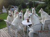 Wir warten auf den Tee