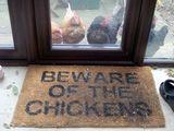 Achtung vor den Hühnern