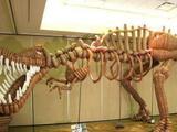 T-Rex aus Ballons