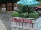 Grüne Erdbeeren