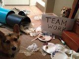 Unordentliches Teamwork