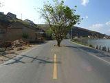 Straßenbepflanzung