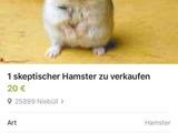Skeptischer Hamster