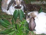 Tiere und Drogen