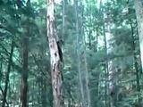 Zwei Dumme und ein Baum